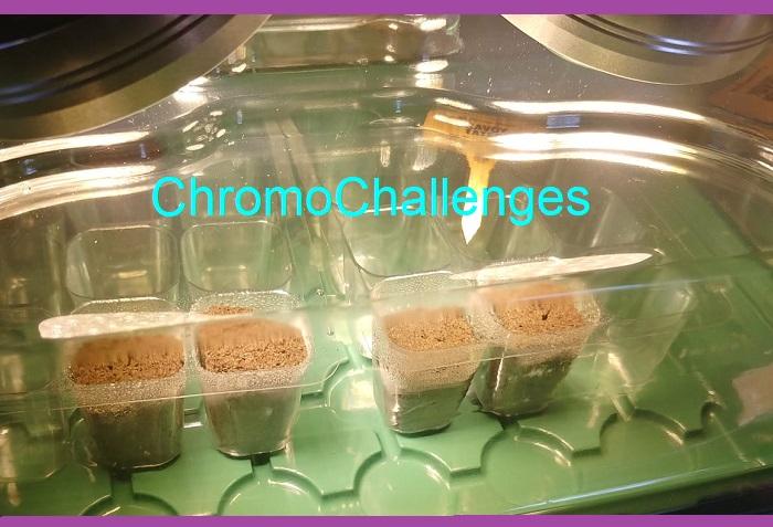 ChromoChallenges Jess Plummer Hydroponic Gardening First Seeds