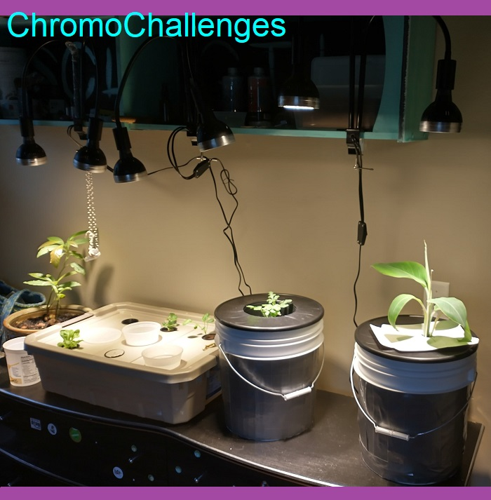 My Kratky Hydroponic Adventure