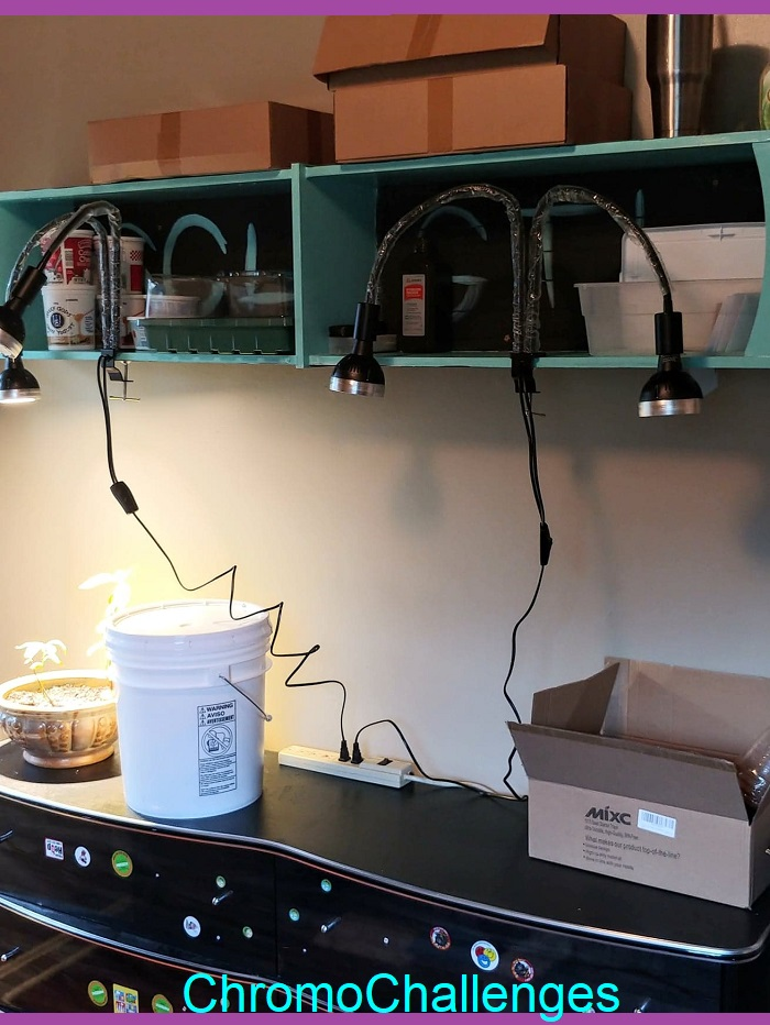 ChromoChallenges Jess Plummer Hydroponic Gardening Setup